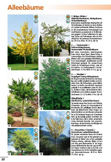 schwitters-pflanzenwelt-alleebaeume