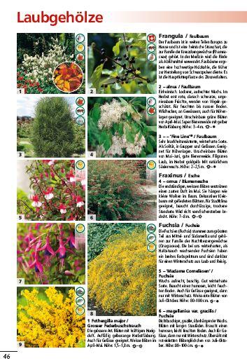 schwitters-pflanzenwelt_laubgehoelze