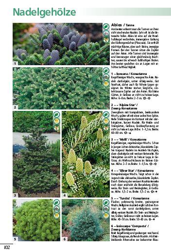 schwitters-pflanzenwelt-nadelgehoelze