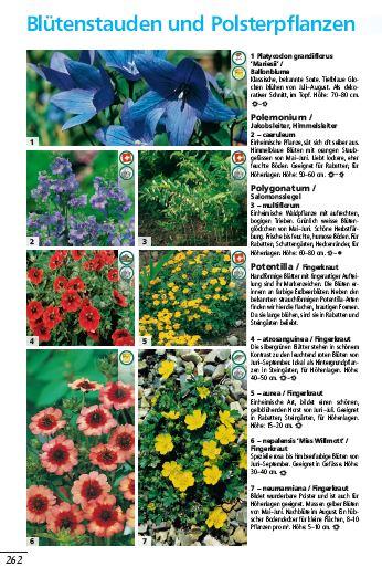 schwitters-pflanzenwelt-stauden