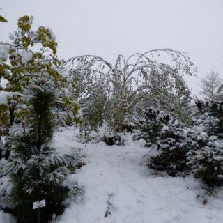 news-schneedruck-wintereinbruch