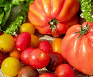 tomate05-web
