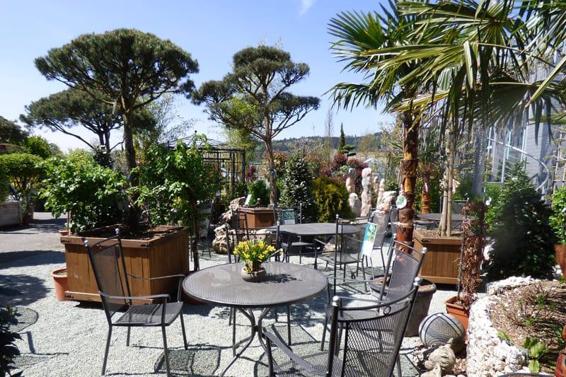 pflege von mediterranen pflanzen im fr hling g rtnerei schwitter ag. Black Bedroom Furniture Sets. Home Design Ideas