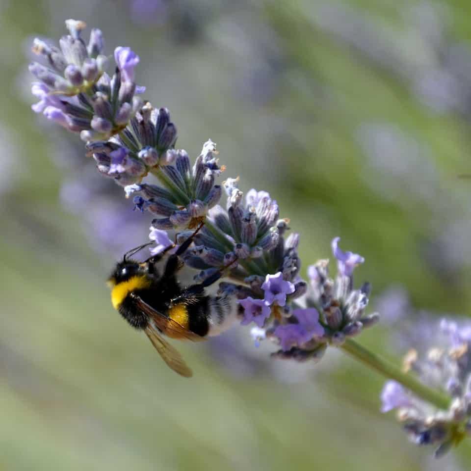 insektenhotel und bienenweide beschenken sie die bienen. Black Bedroom Furniture Sets. Home Design Ideas