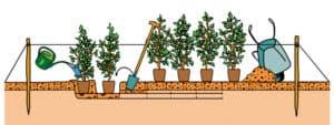 Heckenpflanzen einpflanzen