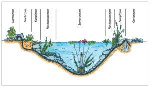 Lebensbereiche Wasserpflanzen