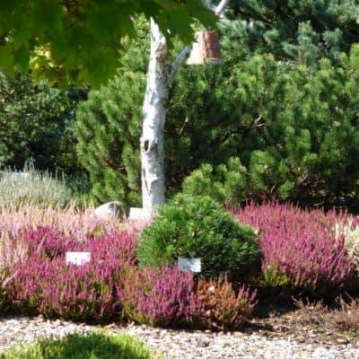 News-Heidegarten (1)