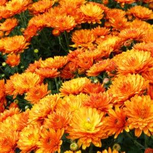 Herbstfloor