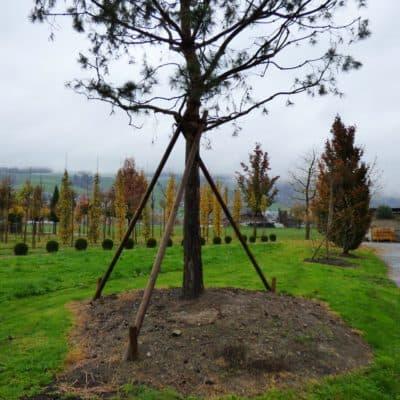 Hügelpflanzung