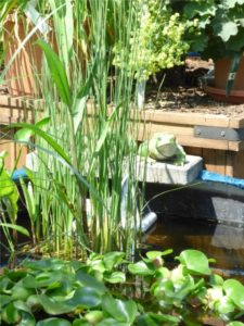 Miniteich_Wasserpflanzen