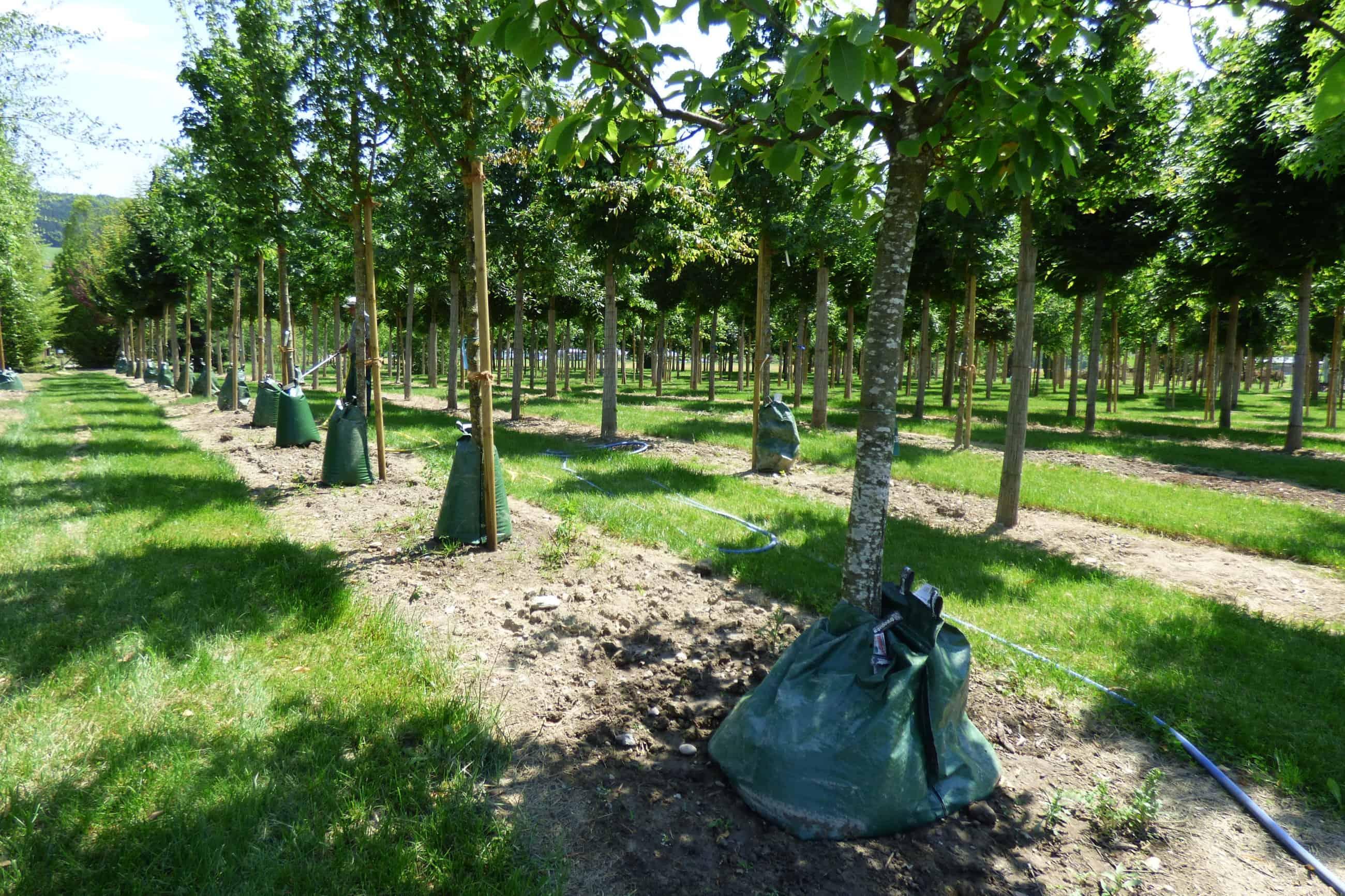 Wassersäcke Für Bäume Selber Machen Weihnachtsdeko